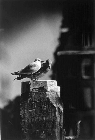 Twee vogels op een dukdalf, Rotterdam, Nederland, 1998