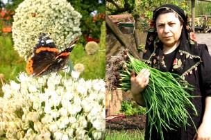 Li: vlinder, Re: Mevr. Ydemer, Nederland, 2006