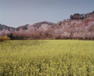 Park bij Fukushima Stad, afgesloten voor publiek, stralingsniveau 0,51 Microsievert per uur, Japan, 2015