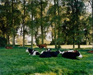 Nederland, Aetsveldsche Polder, 2005