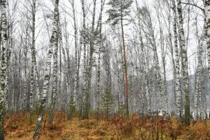 Landschap in het Altaj Gebergte, Rusland, 2017